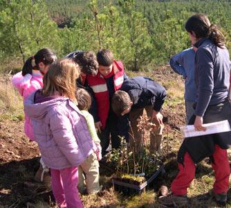 plantacion monte comunal Arnuide